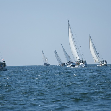 sailfest2019